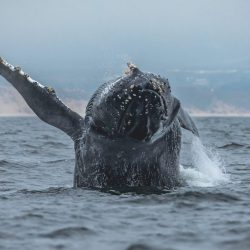 Discover the humpback