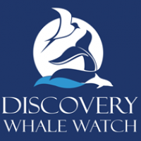 discovery whale watch logo